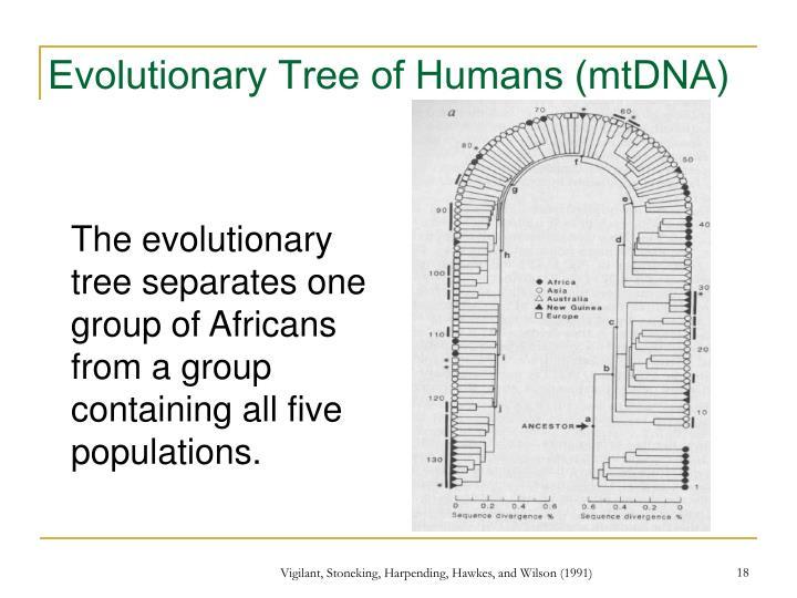 Evolutionary Tree of Humans (mtDNA)