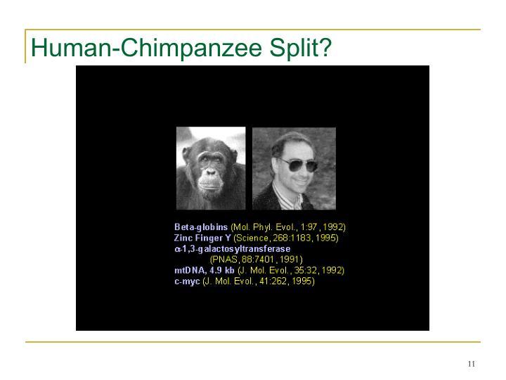 Human-Chimpanzee Split?