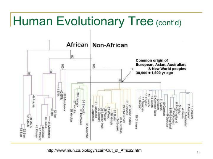 Human Evolutionary Tree