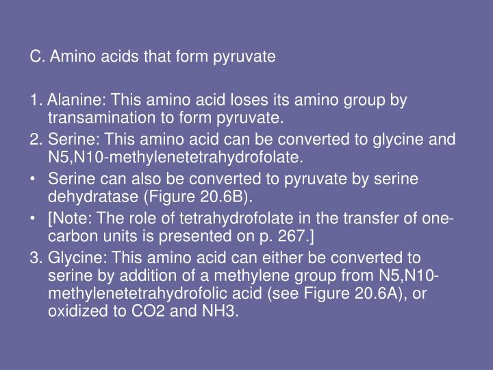C. Amino acids that form pyruvate