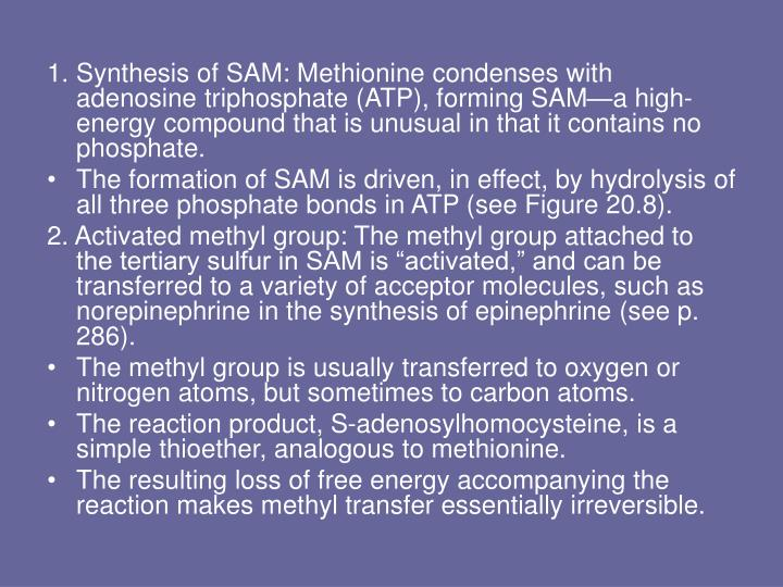 Synthesis of SAM: Methionine condenses with adenosine triphosphate (ATP), forming SAM—a high-energy compound that is unusual in that it contains no phosphate.