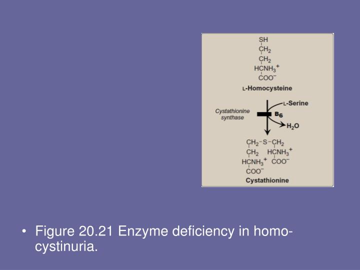 Figure 20.21 Enzyme deficiency in homo-cystinuria.