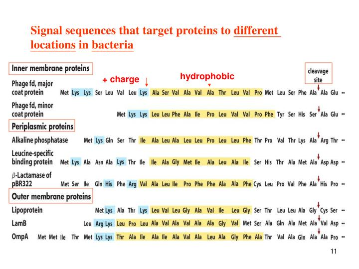 Signal sequences that target proteins to