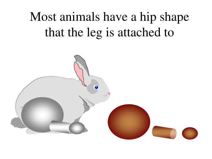Most animals have a hip shape that the leg is attached to