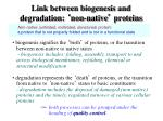 link between biogenesis and degradation non native proteins
