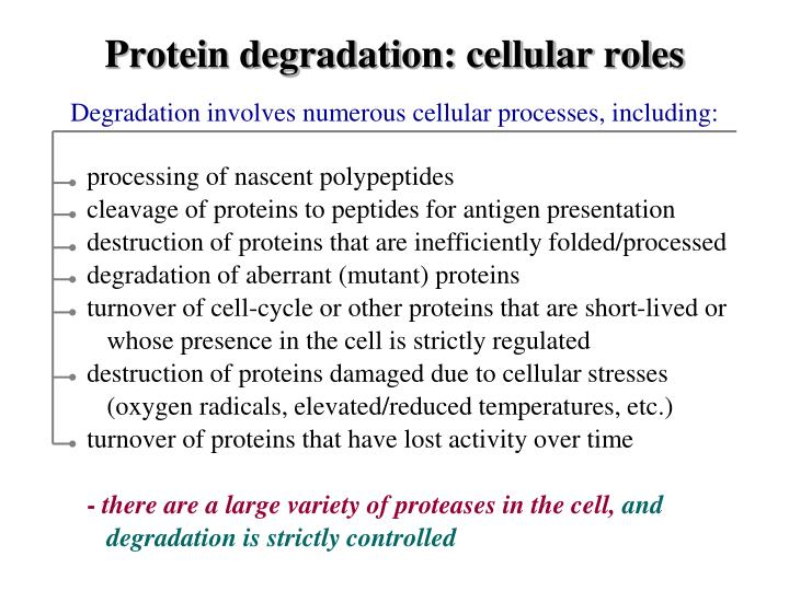 Protein degradation: cellular roles