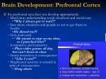 brain development prefrontal cortex