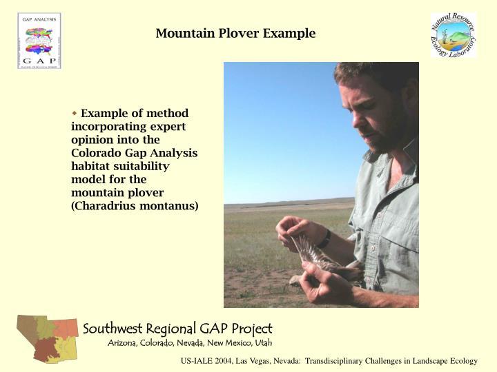 Mountain Plover Example