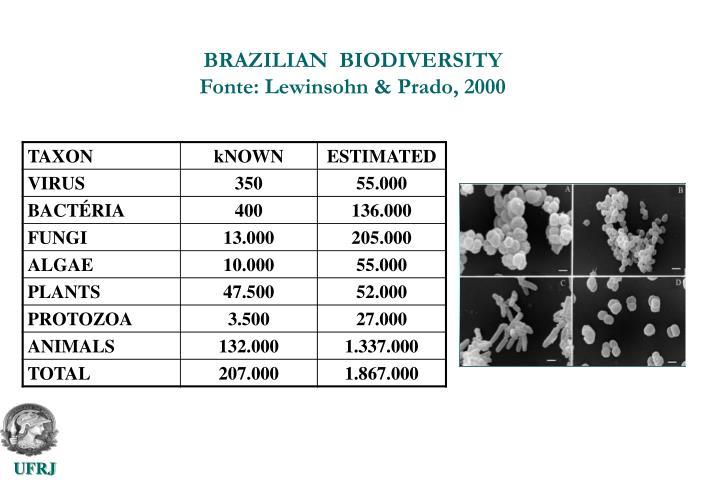 BRAZILIAN  BIODIVERSITY