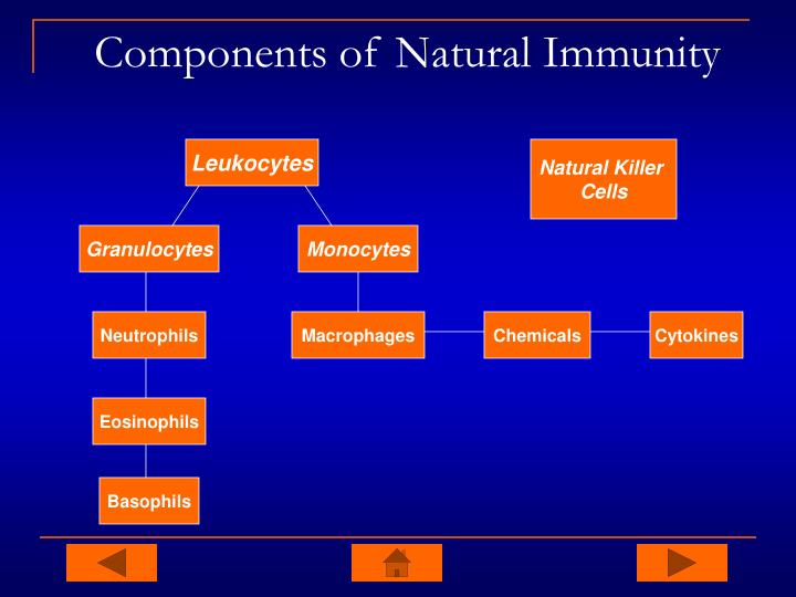 Components of Natural Immunity