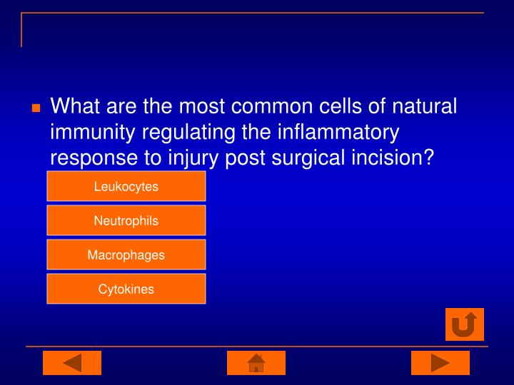 What are the most common cells of natural immunity regulating the inflammatory response to injury post surgical incision?