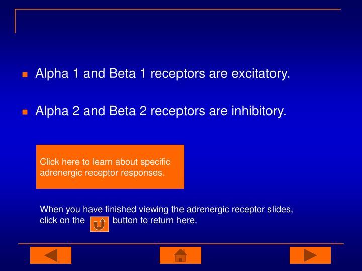 Alpha 1 and Beta 1 receptors are excitatory.