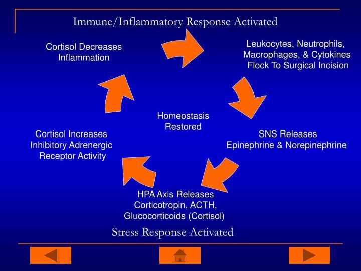 Immune/Inflammatory Response Activated