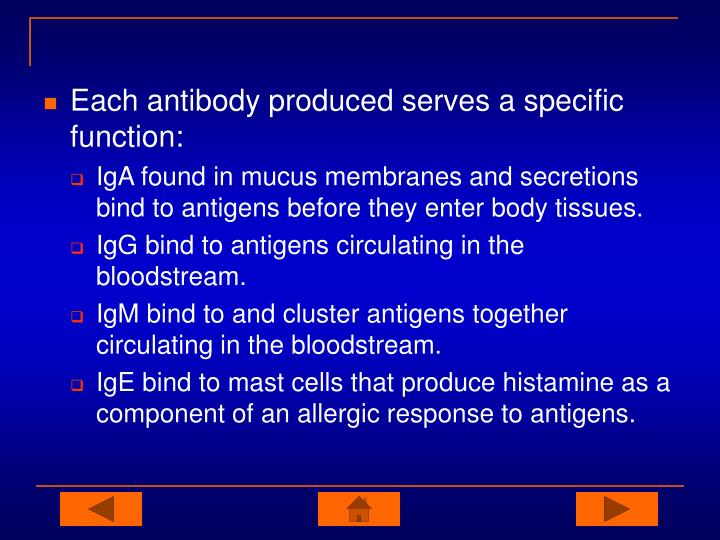 Each antibody produced serves a specific function: