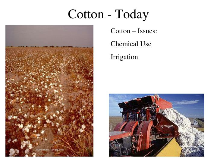 Cotton - Today