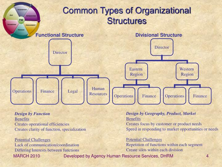Common Types of Organizational Structures