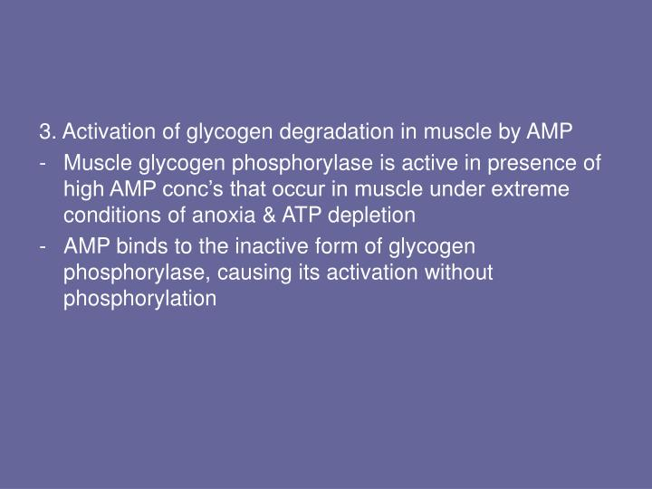 3. Activation of glycogen degradation in muscle by AMP