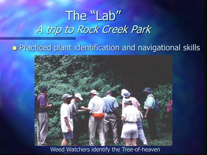 """The """"Lab"""""""
