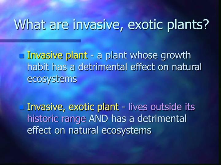 What are invasive, exotic plants?
