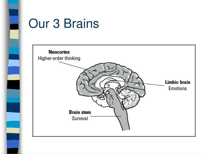 Our 3 Brains
