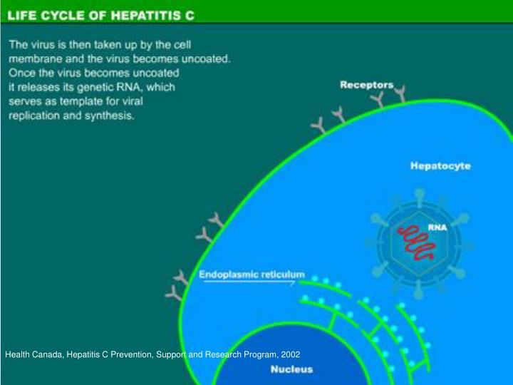 Health Canada, Hepatitis C Prevention, Support and Research Program, 2002