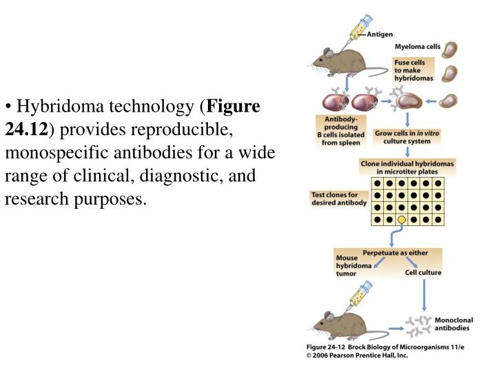 Hybridoma technology (