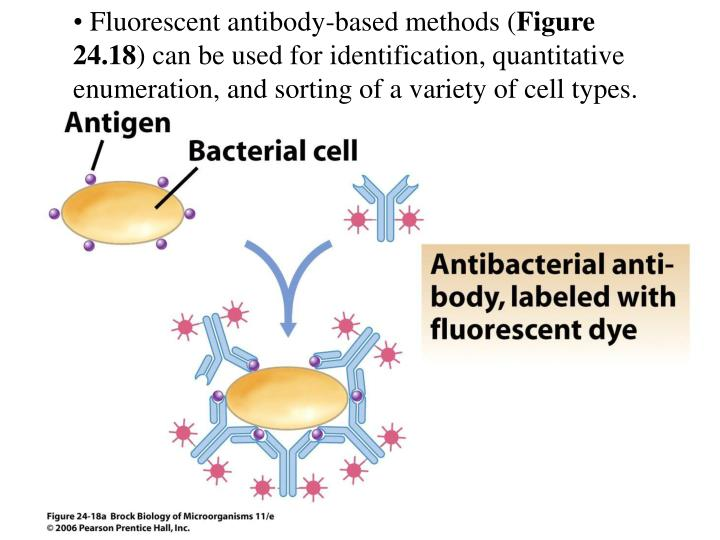 Fluorescent antibody-based methods (