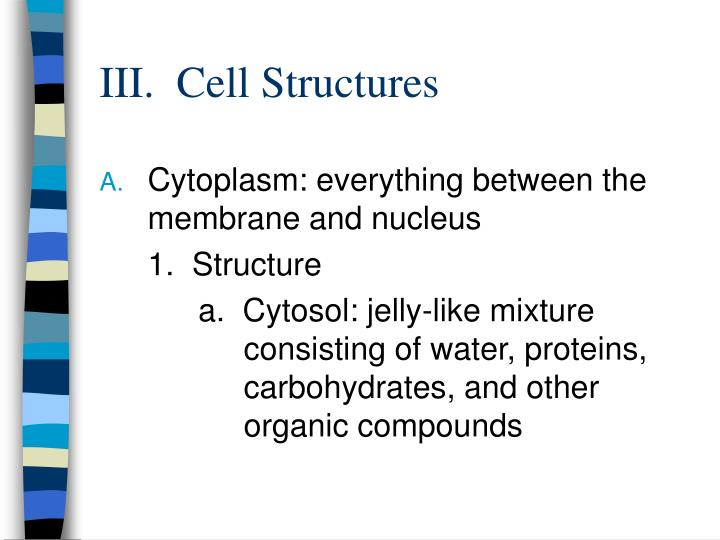 III.  Cell Structures