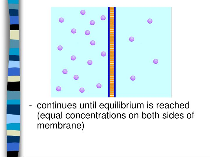 - continues until equilibrium is reached (equal concentrations on both sides of membrane)