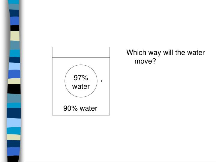 97% water