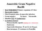 anaerobic gram negative bacilli