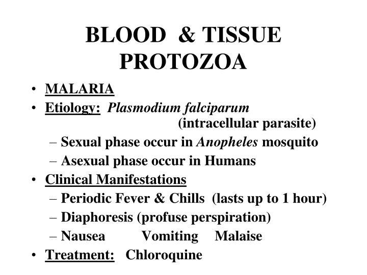 BLOOD  & TISSUE PROTOZOA