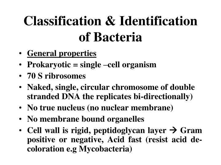 Classification & Identification of Bacteria
