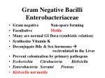 gram negative bacilli enterobacteriaceae