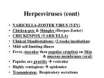 herpesviruses cont