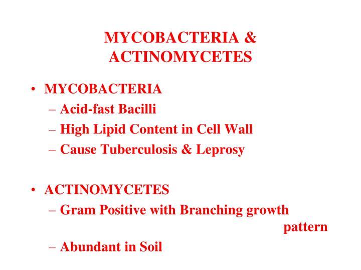 MYCOBACTERIA & ACTINOMYCETES
