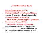 mycobacterum bovis1