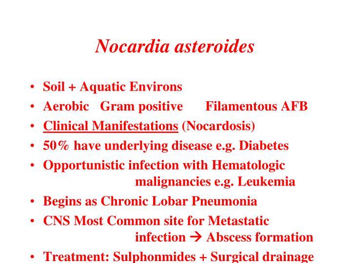 Nocardia asteroides