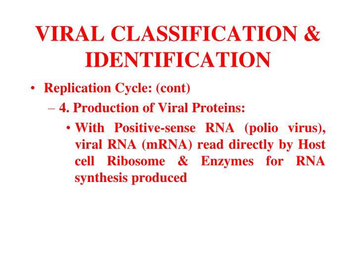 VIRAL CLASSIFICATION & IDENTIFICATION