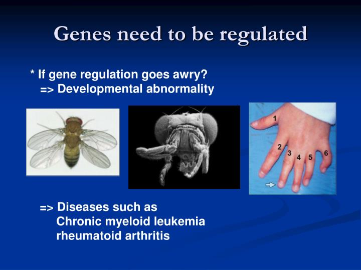 Genes need to be regulated