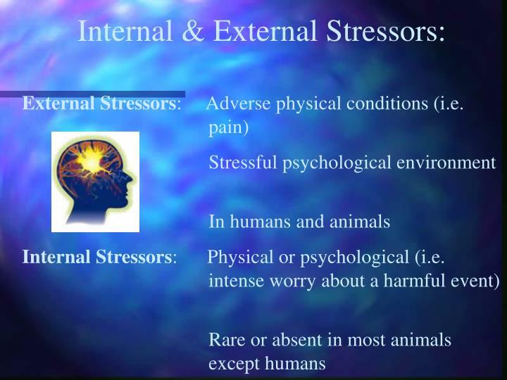 Internal & External Stressors: