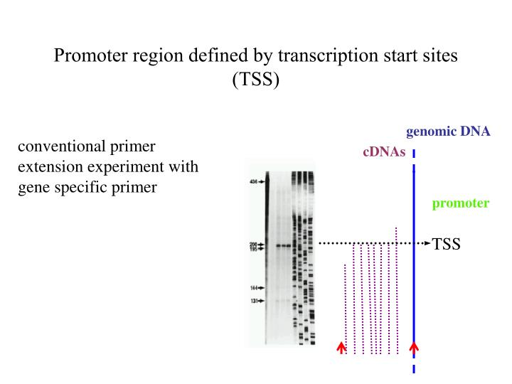Promoter region defined by transcription start sites (TSS)