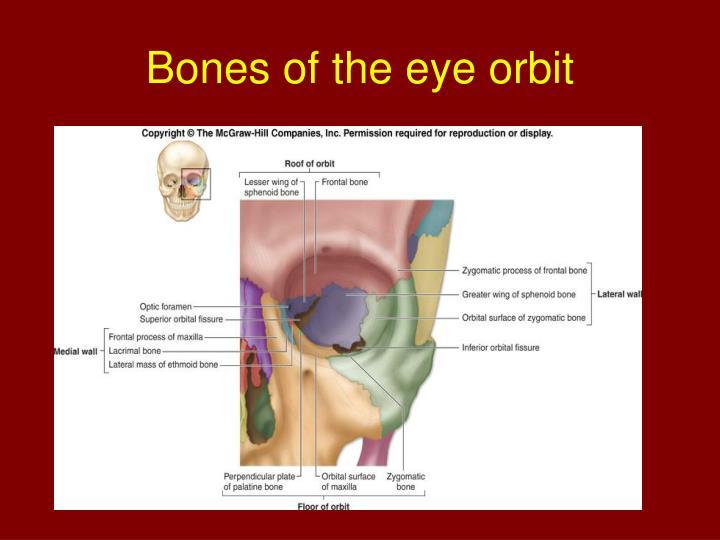 Bones of the eye orbit