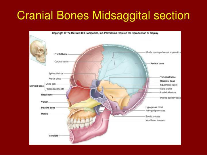 Cranial Bones Midsaggital section