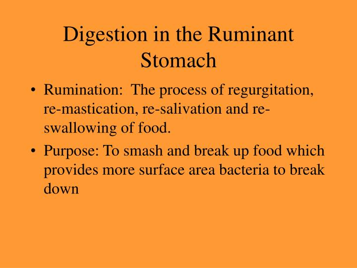 Digestion in the Ruminant Stomach