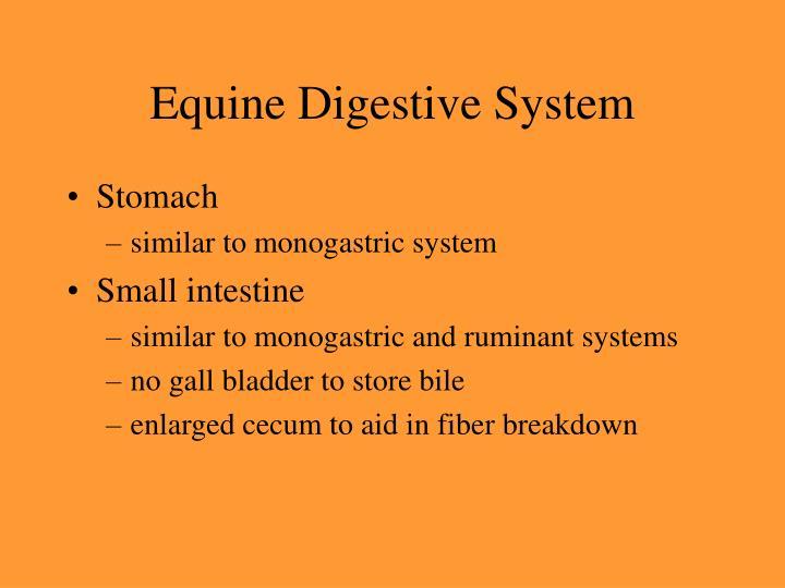 Equine Digestive System
