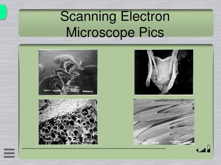 Scanning Electron