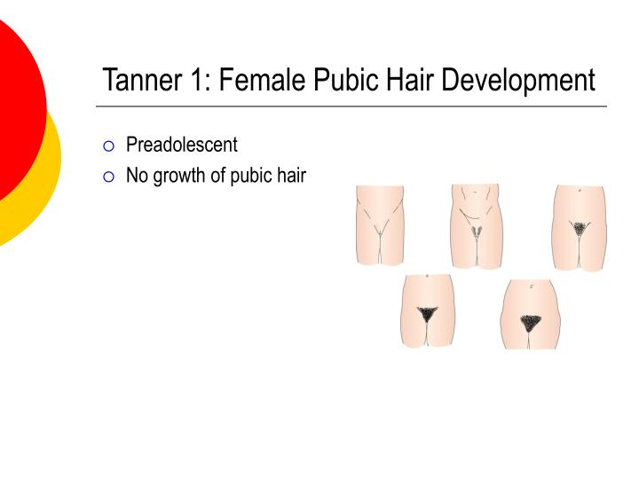 Tanner 1: Female Pubic Hair Development