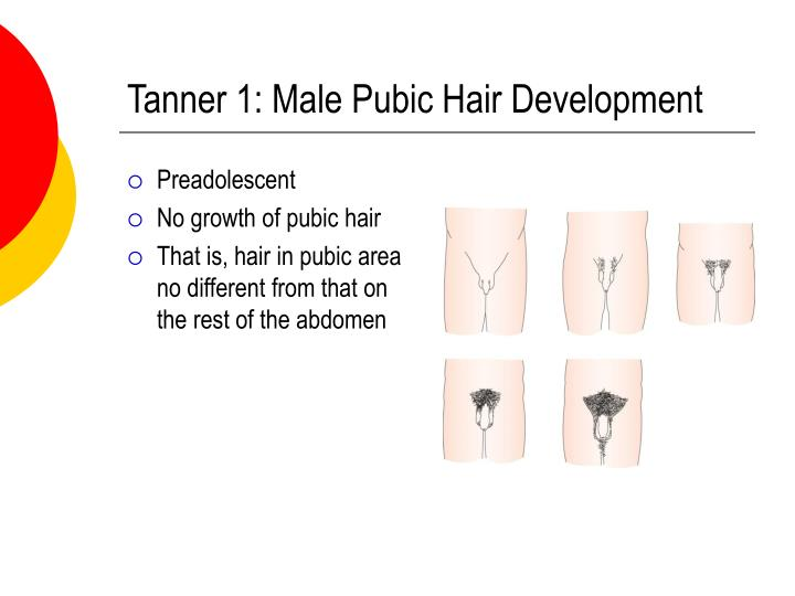 Tanner 1: Male Pubic Hair Development