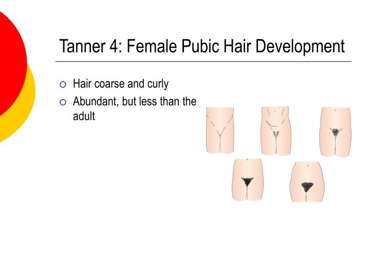 Tanner 4: Female Pubic Hair Development